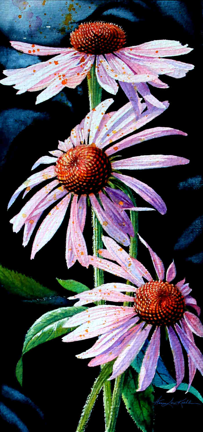 Purple Cone Flowers Paintings