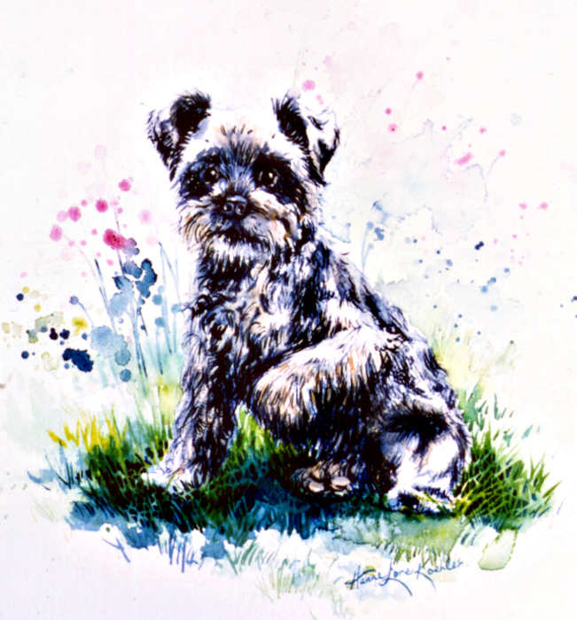 Scottish terrier portrait