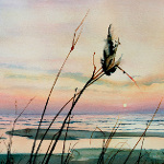 milkweed pod in dune grass with lake sunset