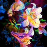 abstract lily flower paintings