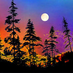 sunset tree silhouette wall murals