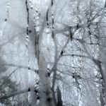 Art photo of birch tree through misty window raindrops