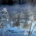 hoar frost on riverbank webs and weeds art photo